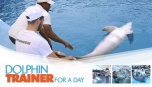 Dolphin Trainer <br/>For A Day