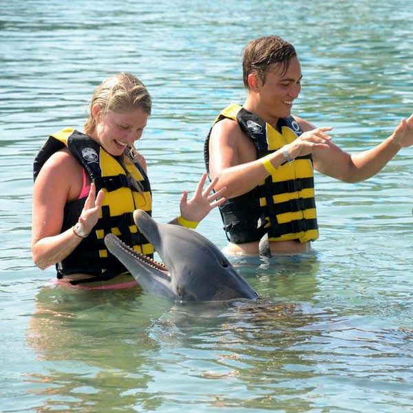 Royal Dolphin Swim En Ocean World